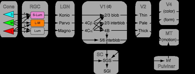 SC_MPK_anatomy_mod_k1ss.png