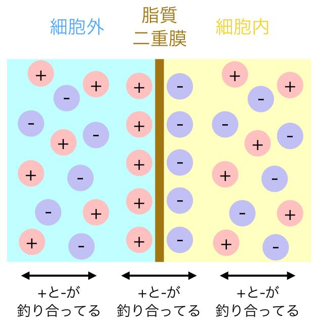 membrane1.png